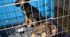 Для функционирования приюта для животных в Симферополе необходим ветеринарный пункт