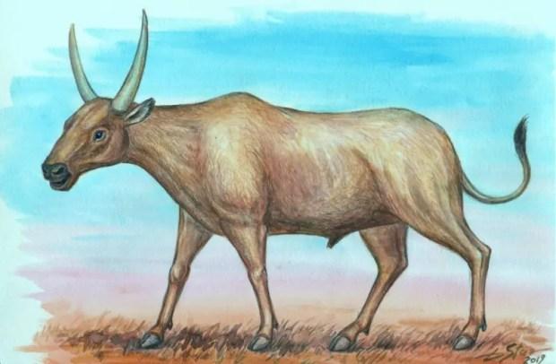 Ученые КФУ выяснили, каким животным принадлежат кости в пещере «Таврида»