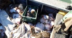 Крымские пограничники задержали в Азовском море украинских браконьеров. С уловом камбалы