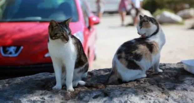 В Крыму намерены уберечь животных от жестокого обращения