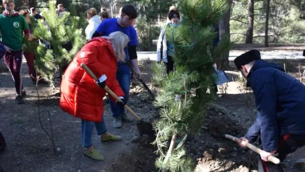 В 2020 году в Ялте высадят порядка 5000 растений
