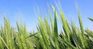 Крымские аграрии получат 204,5 млн рублей субсидий
