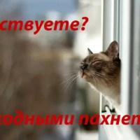 В Крыму «плюс» четыре выходных дня: 20 апреля, 25 мая, 8 июня, 31 июля. Догадались, почему?