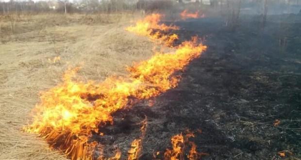 В Крыму с начала года ликвидированы десятки возгораний сухой растительности