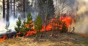 Внимание! В западных районах Крыма - высокая пожарная опасность