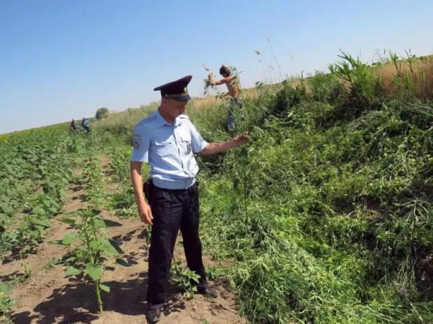 В Крыму стартовала оперативно-профилактическая операция «Мак – 2020»