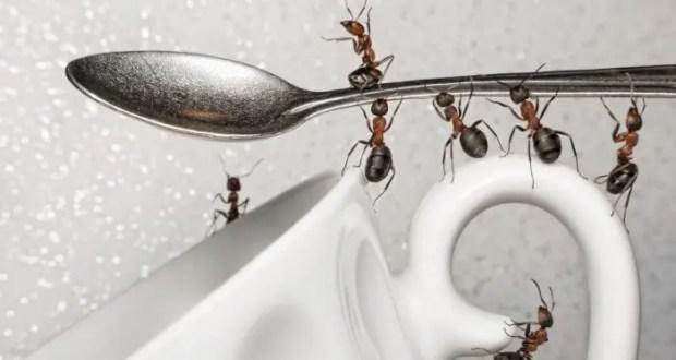 Когда насекомые атакуют: действенные способы по борьбе с муравьями