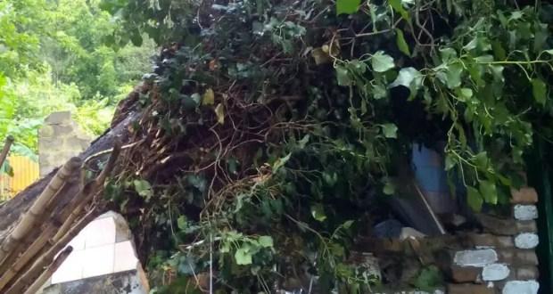 В Евпатории упавшее дерево заблокировало выход из жилого дома