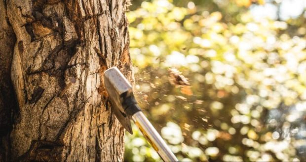 Нельзя! Севастополец рубил деревья - пошёл под суд