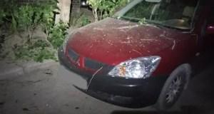 В Феодосии дерево ветром повалило на припаркованные автомобили