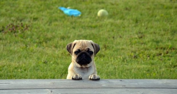 Парковые зоны Симферополя для собак - под запретом