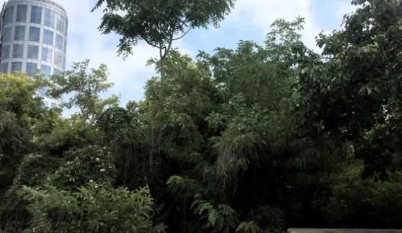 В севастопольской Артиллерийской бухте определяют под снос деревья