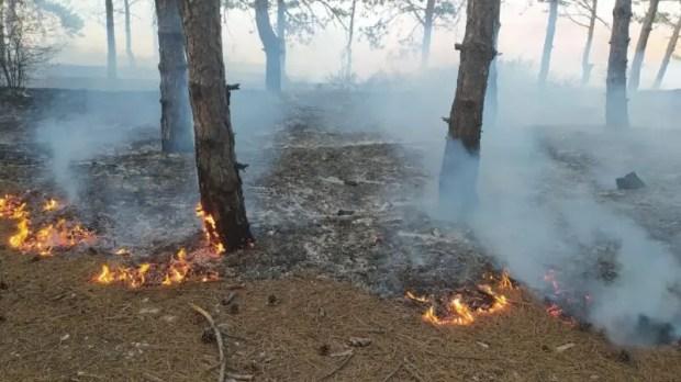 Утренний лесной пожар под Феодосией