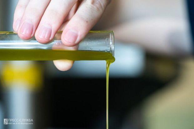 Оливки в Крыму: в «Артеке» – своя роща, в КФУ им. Вернадского – своя линия производства масла