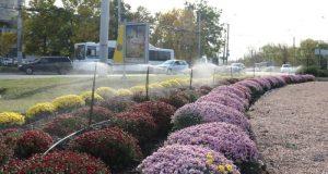 Как проходит озеленение и благоустройство транспортных колец Симферополя