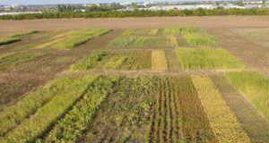 Учёные КФУ назвали эффективный способ повышения плодородия почвы