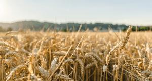 Севастопольских аграриев возможно освободят от налогов
