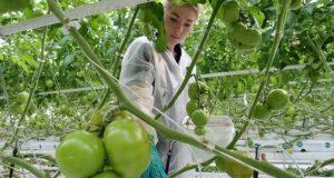 Инвестор в Крыму вложит в развитие производства тепличных овощей более 4 млрд рублей