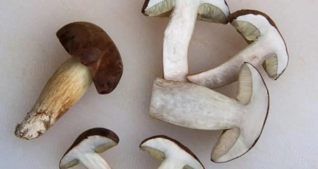 Жертвы «тихой охоты»: в Севастополе 38 человек отравились грибами