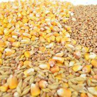 Правительство России решило поставить в Крым 19 тысяч тонн пшеницы из госфонда