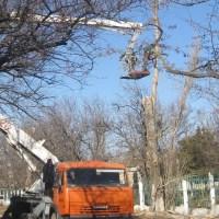 В Симферополе на два дня перекроют улицу для обрезки деревьев
