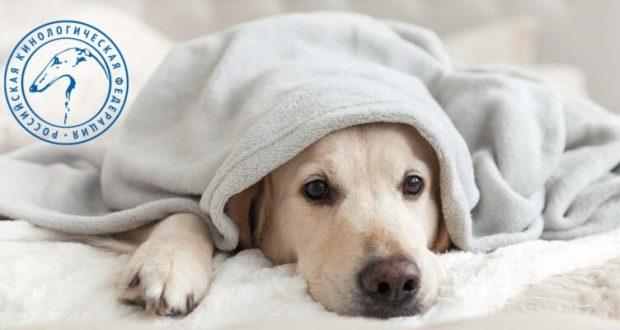 Вызывайте Айболита! Пять признаков, которые должны насторожить хозяина собаки