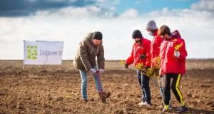 На территории Сакского лесничества высадили почти четыре гектара саженцев дуба