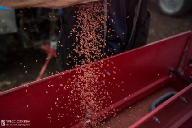 КФУ получил 5 млн на покупку оборудования для первичного семеноводства