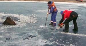 «КРЫМ-СПАС» вытащил из проруби лошадь, провалившуюся под лед