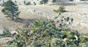 Зачем на Ай-Петри вырубили деревья