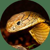 к чему снится змей
