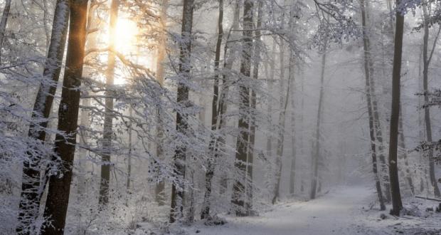 24 января — день Феодосея-Весняка. День Феодосия Великого