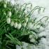Погода в Крыму - снег небольшой, но будет