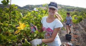 В Крыму специалисты, трудоустроившиеся в сельской местности, могут получить единовременную помощь