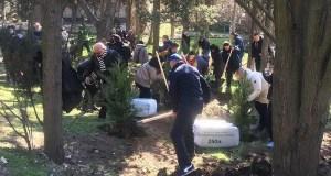 В Форосском парке высадили 80 хвойных деревьев