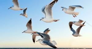 4 марта — день Архипа и Филимона. Птицы тепло кличут