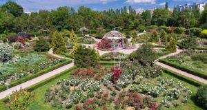 Учёные КФУ разработали ассортимент растений для озеленения Севастополя