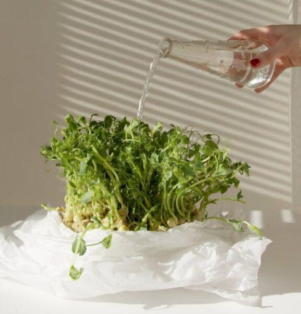 Микрогрин - здоровая идея: что нужно, чтобы обустроить мини-ферму для выращивания зелени