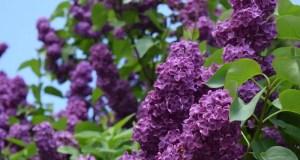 Погода в Крыму: 8 мая- тепло и сухо, 9 мая - задождит