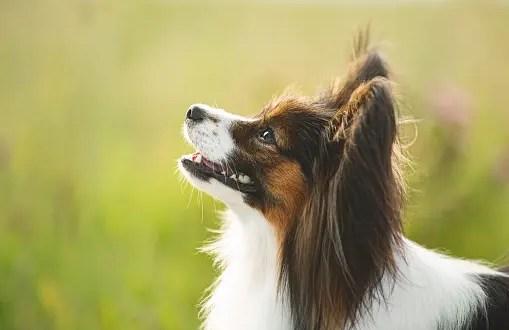 В Симферополе владелица собаки засудила ветклинику