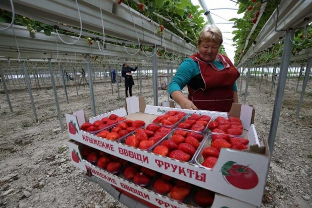 В Крыму запущен новый высокотехнологичный тепличный комплекс… на скалах