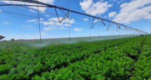 Крымские аграрии отмечают День мелиоратора