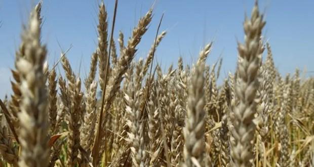 Непогода, бушевавшая в Крыму с 16 по 20 июня, нанесла ущерб 4 сельхозпредприятиям