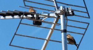 Цифровое телевидение: как выбрать антенну стандарта DVB-T2