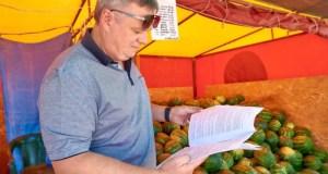 В Севастополе вовсю продают арбузы и дыни. Где купить?