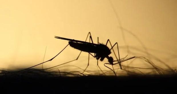 В Крыму – нашествие комаров
