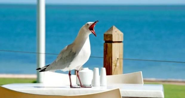 Крым - среди самых популярных направлений отдыха в августе