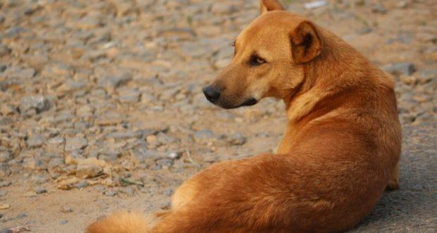 Не догхантер, но за убийство собаки ответит. Крымчанина будут судить за жесткое обращение с животными
