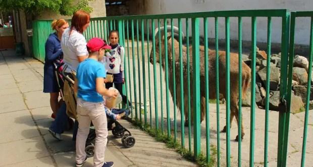 В Симферополе реконструируют зооуголок Детского парка. Не исключен переезд