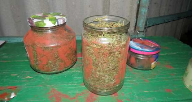 Житель Нижнегорского района Крыма обнаружил в своем огороде коноплю… а дальше нарушил закон